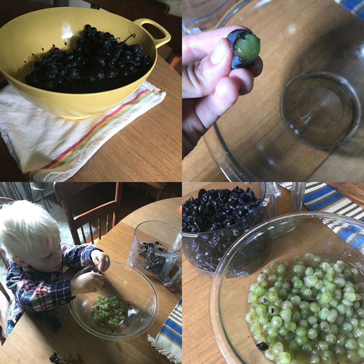 grape skin, processing concord grapes, jam making