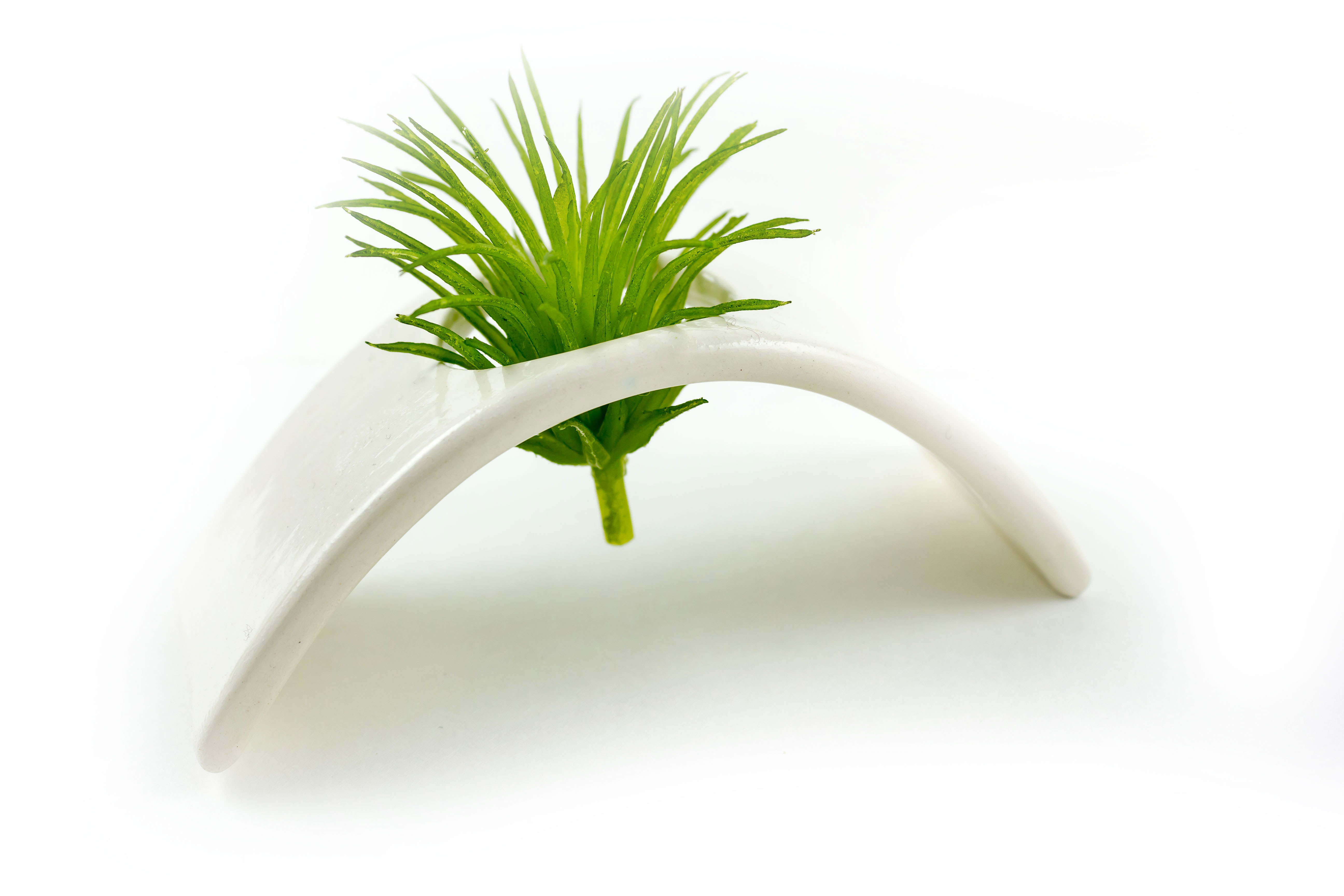 last minute gifts holiday gift guide homespun indianapolis air plant